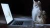 E cea mai haioasă pisică pe care ai văzut-o vreodată! REACŢIA felinei care se uita la un film (VIDEO)