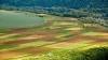 Descoperire șocantă într-un lan de floarea-soarelui din Vulcănești. Cum au reacționat polițiștii (VIDEO)