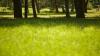 IMPORTANT! Cinci dintre cele mai neobişnuite boli pe care le poţi lua de la o ieşire la iarbă verde