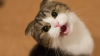 Sigur nu știai asta! Ce fac toți iubitorii de pisici în SECRET