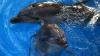 Show de excepţie! Primul delfinariu din Chişinău îşi deschide uşile pentru spectatori