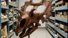 FASCINANT: Noi specii de dinozauri au fost descoperite în SUA (FOTO)