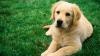 EMOŢIONANT! REACŢIA unui câine atunci când îşi întâlneşte stăpânul după doi ani de despărţire (VIDEO)