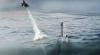 Dronele militare Blackwing pot fi lansate de sub apă, de pe submarine sau vehicule autonome