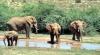 Namibia vinde 170 de elefanți din cauza secetei și conflictelor dintre oameni și animale