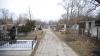 Intervenţie NEOBIŞNUITĂ într-un cimitir din Capitală! Voluntarii au alergat prin ploaie să-l prindă