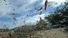 Stare de alertă în Daghestan. Mii de hectare, invadate de lăcuste