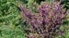 Planta miraculoasă care vindecă zeci de boli și previne cancerul