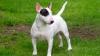 Caz șocant în Anglia! Mai mulţi copii au fost atacați de un câine în timp ce se aflau într-un parc