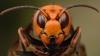 Poate ucide omul! O insectă periculoasă, depistată în mai multe orașe din Marea Britanie