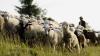 Anchetatorii au stabilit ce au băut cei doi cioban care au murit intoxicaţi la o stână din raionul Teleneşti
