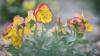 Chişinăul prinde culoare! Zeci de mii de flori au fost sădite în mai multe zone ale Capitalei