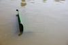 O bancă din parcul Valea Morilor, aruncată în lac! Cum au reacţionat poliţiştii şi trecătorii (FOTO)