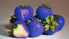 CĂPŞUNI ALBASTRE! Fructele create pentru a rezista temperaturilor scăzute