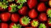 Eveniment DELICIOS! Festivalul Căpșunilor şi Mierii se desfăşoară în satul Sadova