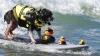 DEVOTAMENT! Doi patrupezi fac surfing alături de stăpânul lor (VIDEO)