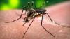Virusul Zika riscă să ajungă la frontiera cu Moldova! Vezi ce țări mai sunt in pericol