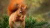 """Imagini haioase! Mai mulți soldați fug când sunt """"atacați"""" de o veveriță (VIDEO)"""