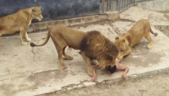 Un tânăr a vrut să se sinucidă şi s-a aruncat în cuşca cu lei. Ce a urmat e de-a dreptul ORIBIL (VIDEO 18+)