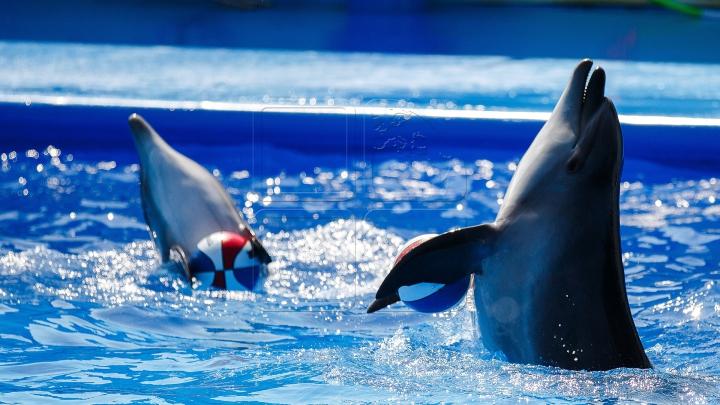 SPECTACOL și PROTESTE. Cum și-a deschis ușile primul delfinariu din Chişinău (FOTOREPORT)