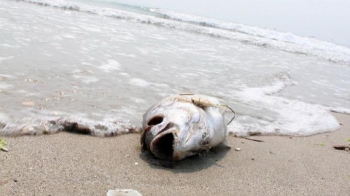 Fenomen inexplicabil pe o plajă din Vietnam. Sute de savanți, convocați de urgenţă de Guvern (FOTO)