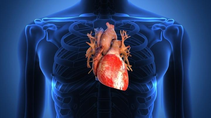 Oamenii de ştiinţă au descoperit gena MUTANT care protejează inima