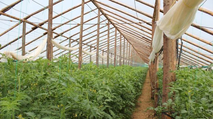 Fermierii, ÎNGRIJORAŢI. Vremea de afară e prea rece pentru creşterea în termen a culturilor