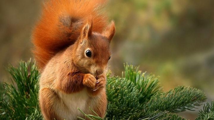 Se caută îngrijitor pentru o veveriță dintr-un parc. Ce salariu se oferă
