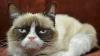 Un cuplu din SUA a sunat la Poliție și a spus că pisica îi ține ostatici în casă. Află ce a urmat