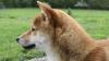 #LIKEPUBLIKA. Ai văzut vreodată un câine să aibă UN ASTFEL de comportament ciudat? (VIDEO)