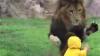 SCENĂ ŞOCANTĂ la o grădină ZOO din Japonia: Un leu fioros atacă un copil (VIDEO)