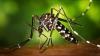 VIRUSUL ZIKA: În SUA se intensifică lupta împotriva țânțarului vector al bolii