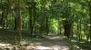 Păduri defrișate ilegal în Moldova. Ministerul Mediului anunță măsuri DRASTICE
