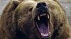18 oameni au mâncat carne de urs fără să ezite. CE A URMAT E GROAZNIC