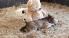 ADORABIL! Motivul pentru care un ponei nu se dezlipeşte de ursuleţul său de pluş (VIDEO)