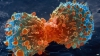 ALARMANT! A fost descoperit cancerul care se transmite între specii (VIDEO)