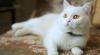 MAESTRĂ ÎN EVADĂRI! O felină uimeşte Internetul cu abilităţile sale (VIDEO)