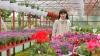Povestea familiei Duda care şi-a transformat pasiunea pentru flori într-o AFACERE PROFITABILĂ