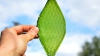 Prima frunză biologică sintetică ar putea permite oamenilor să colonizeze spaţiul (VIDEO)