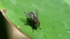 Life Style: Cum să alungi muştele şi ţânţarii prin remedii naturale