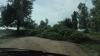 Rafalele puternice de vânt au doborât mai mulţi copaci la intrarea în satul Cuşmirca (FOTO)