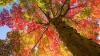 Norvegia INTERZICE tăierea copacilor. Ce planuri au deputaţii norvegieni