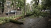Un funcționar de la Primărie, REȚINUT în urma copacului prăbușit ieri în Capitală