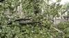 """REACȚIA Întreprinderii """"Spații Verzi"""" după ce o femeie a fost strivită de un copac în Capitală"""