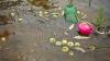 HECTARE ÎNTREGI DE ROADĂ, DISTRUSE DE PLOI. Fermierii au pierderi de ZECI DE MII DE LEI