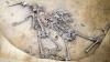 Masacru de acum 6.000 de ani, descoperit în Alsacia