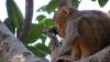 Furt mai puțin obișnuit în India. Un magazin a fost jefuit de o maimuţă