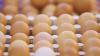 ÎMBUCURĂTOR! A crescut exportul produselor lactate şi ouălor pe piaţa europeană