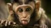 O maimuță a declanșat o pană de curent la nivel național în Kenya. Cum a reușit acest lucru