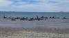 CATASTROFĂ ECOLOGICĂ! 32 de balene-pilot au eșuat pe o plajă din Java
